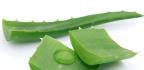 Aloe vera zpomaluje stárnutí pokožky