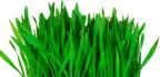 Zelené potraviny pro detoxikaci auzdravení