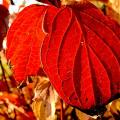 Podzimní detoxikace omlazuje tělo imysl