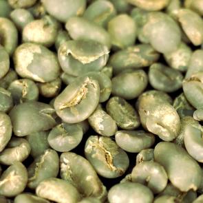 Zelená káva nejen nahubnutí