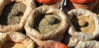 Přírodní bylinky pro suché oči