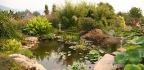 Zahradní jezírko