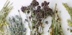 Mateřídouška atymián – léčivky smagickou vůni