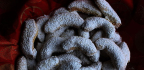 Recepty navánoční cukroví vanilkové rohlíčky
