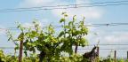 Kalendář pro vinaře - květen
