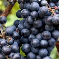 Kalendář pro vinaře - říjen