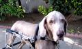 Nemoci starých psů