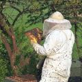 Včelaření vnástavcích