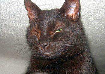 nafouklé černé kočičí rty hary kočička porno