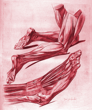 Lidská noha