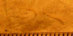 Bílé částečky vestolici