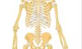Bolesti pohybového aparátu