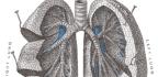 Idiopatická plicní fibróza