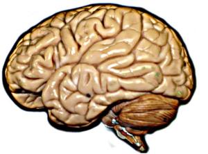 Cévní mozková příhoda