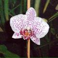 Jak na pěstování orchidejí