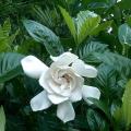Přesazování pokojových rostlin