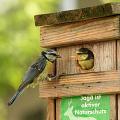 Ptačí budky
