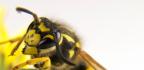 Léčba bodnutí hmyzem