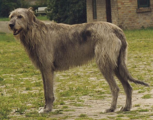 Betadine pro psa