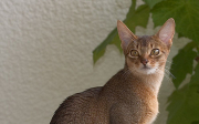 Oblíbené druhy koček